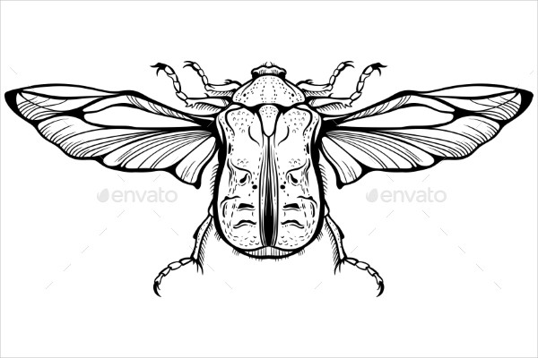 Close-up Drawing of a Bug