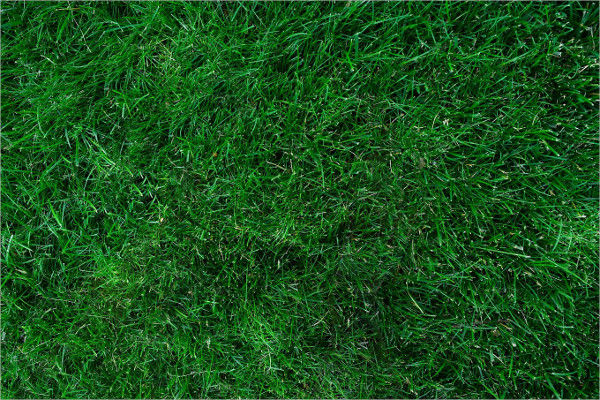 High Resolution Grass Background