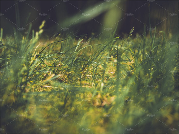 Green Grass Background with Blur