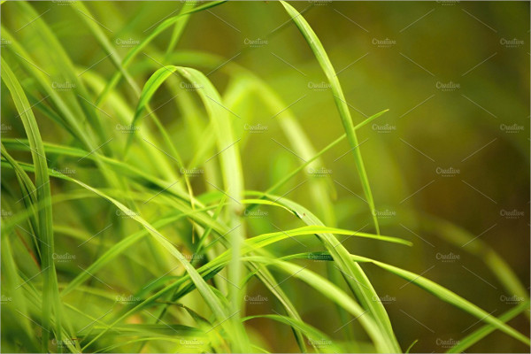 Green Grass Blurred Backgrounds