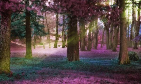 Amazing Landscape Forest Photography