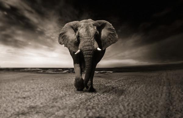 Black &White Animal Photography Free