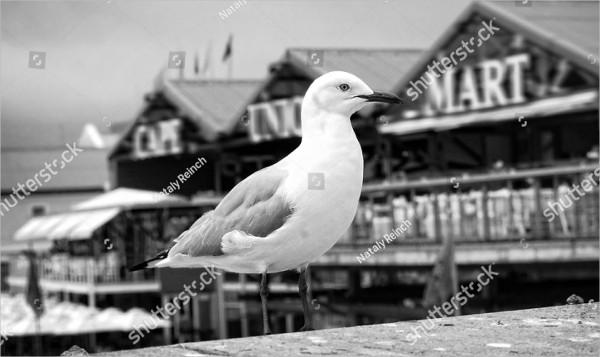 Black &White Bird Photography
