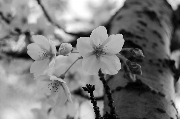 Black & White Flower Photography