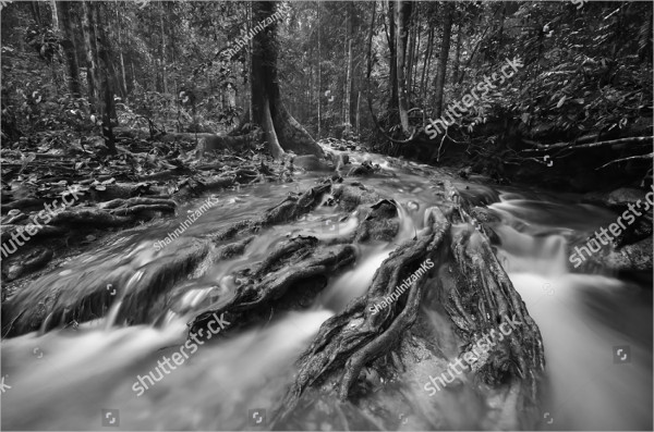 Black and White Forest Photography