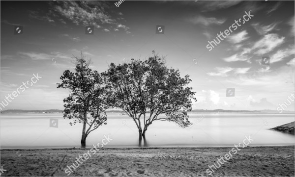 Black and White Tree Photography