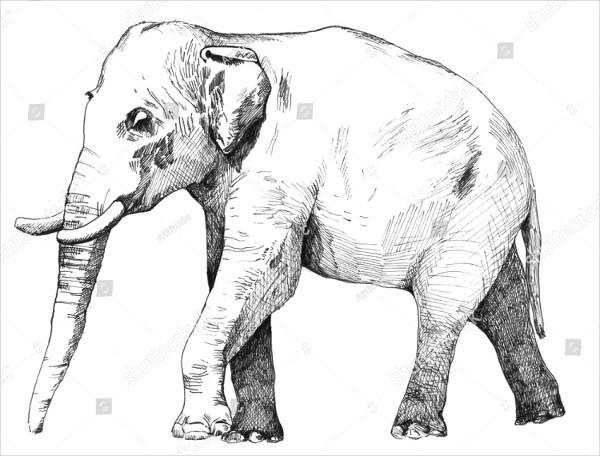 Easy to Draw Elephant