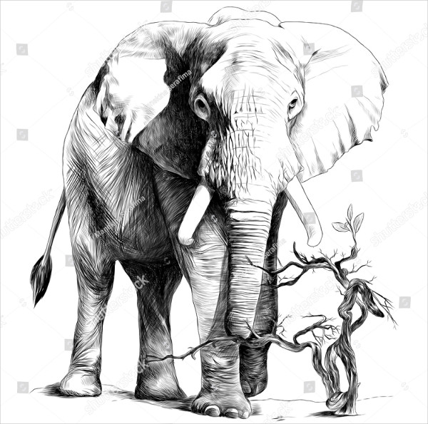Elephant Drawing for Kid