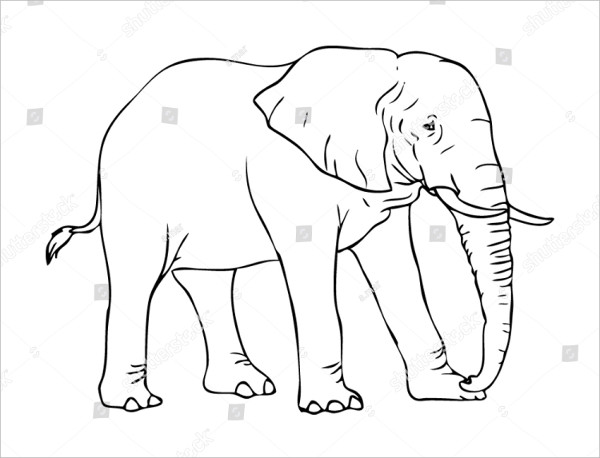 Elephant Line Drawing