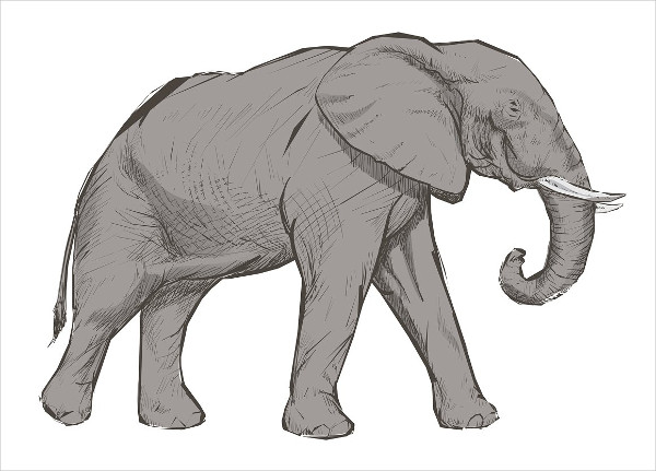 Elephant Sketch Drawing