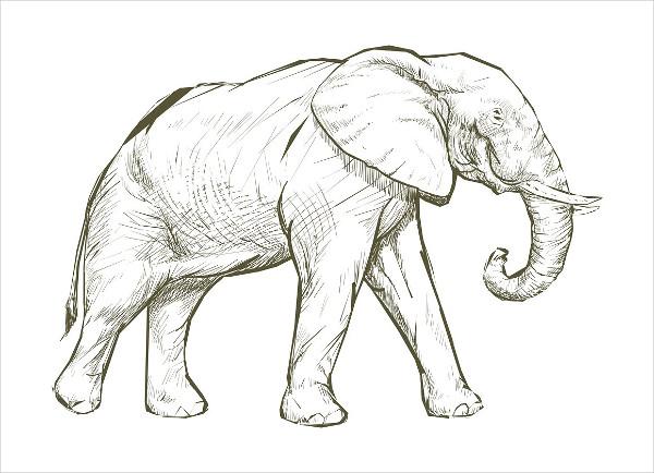Illustration Drawing of Elephant