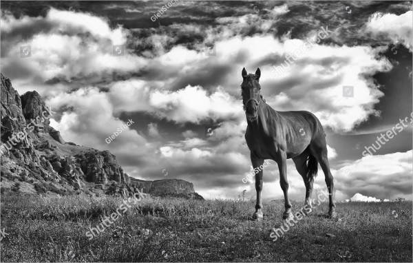 White and White Horse Photography