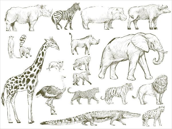 Illustration Drawing of Wildlife