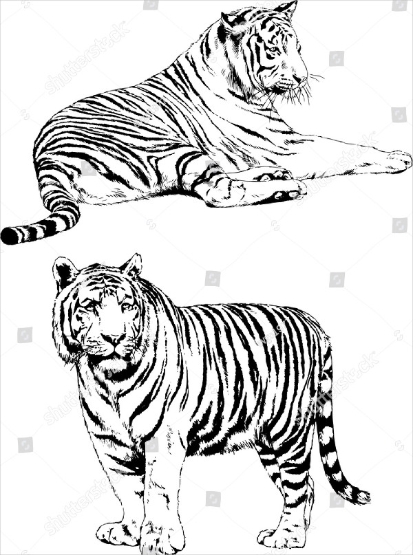 Set of Vector Drawings of Animals