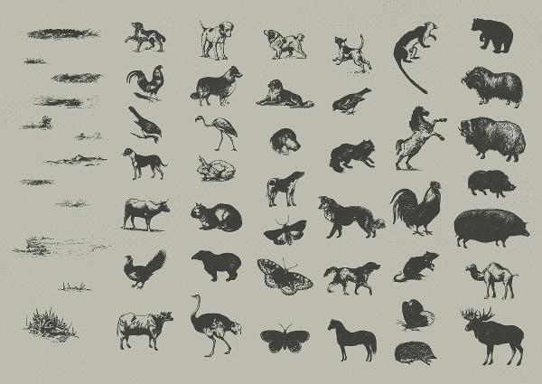 Vintage Animal Drawings Bundle