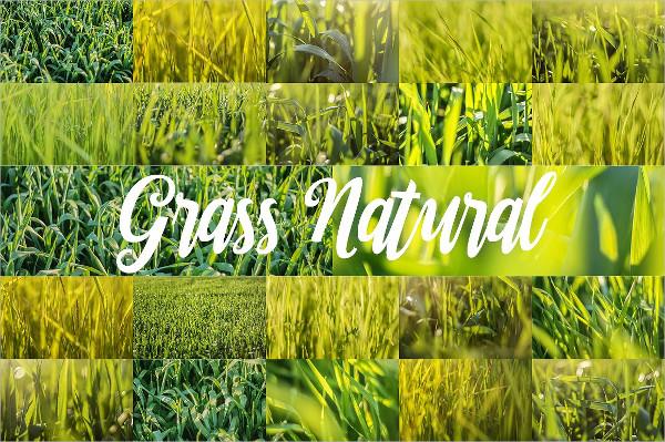 88 HD Grass Backgrounds Set
