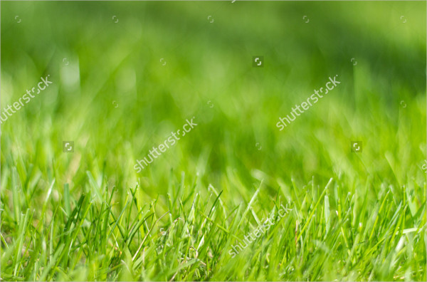 Perfect Grass Background