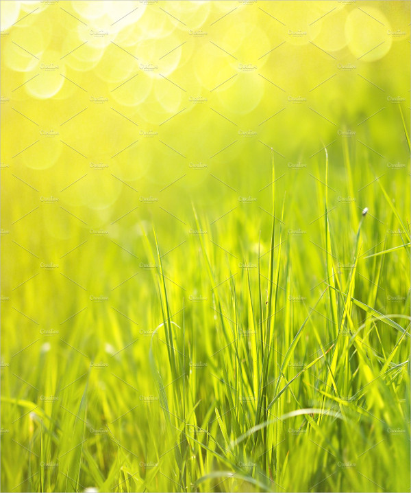 Sunny Spring Green Grass Background