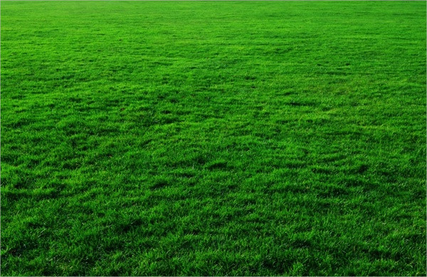 Free Vector Grass Backgrounds