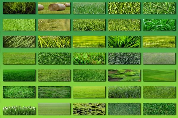 100 Grass Background Textures