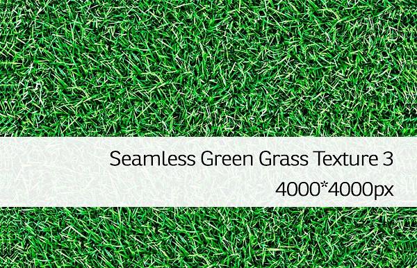 Perfect Seamless Green Grass Texture