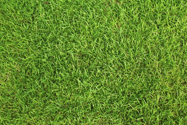 Texture of Grass Field Free