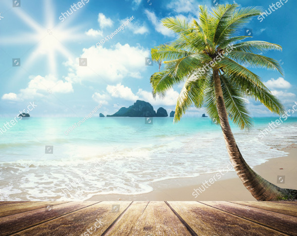 Palm Tree at the Beach Background
