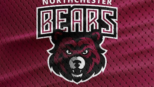 Bear Logo Templates