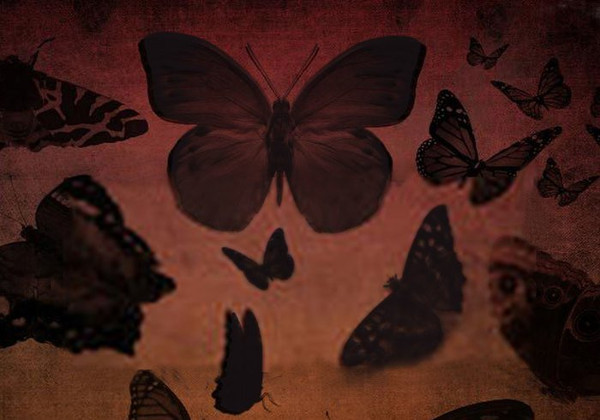 Butterfly Brush Set Free Download